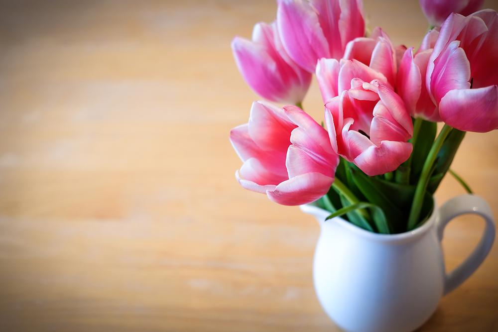 philip-howold-Tulpen